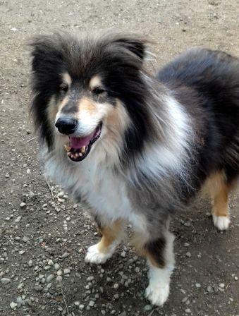 chien donner adopte